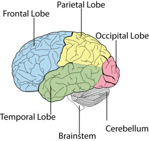 Brain and Nervous System Part 2 - Pain & Posture Wellness ...