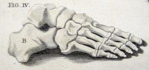 foot-bones-2